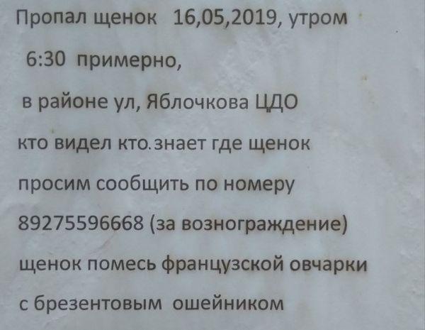 61659503_2233809083333155_5479315329714749440_o.jpg